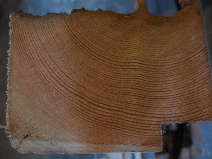 Old douglas fir.
